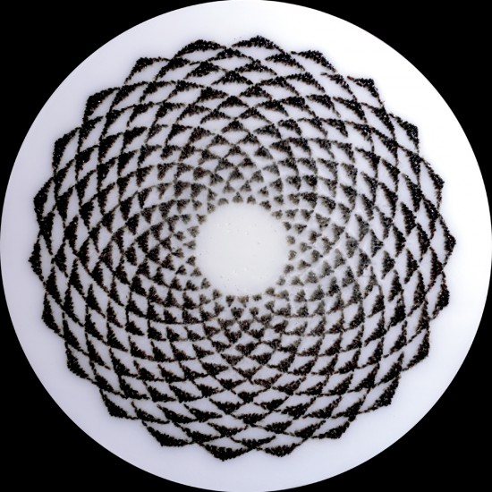 "Circle 1. Honeybees (Apis mellifera), resin on panel, 2013. (36"" x 36"" diameter)"